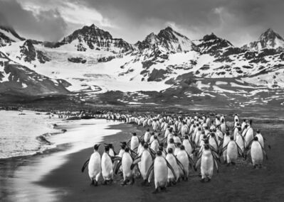David Yarrow, 'The Breakfast Club, South Georgia', 2018