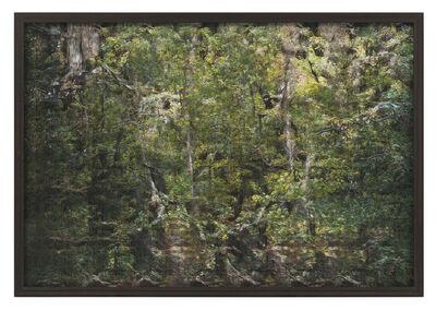 Andreas Greiner, 'Jungle_Memory_0001', 2019