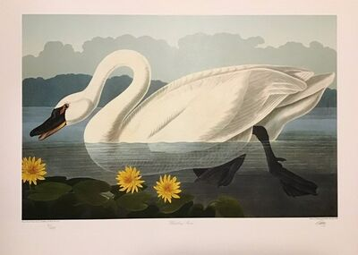 John James Audubon, 'Whistling Swan - Publisher's Proof  (Plate 411) Signed, Numbered ', 1992