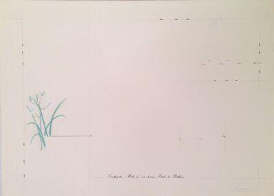 Marie Orensanz, 'Ornithogale, Belle-de-onze-heures, Etoile-de-Bethleem', 1977