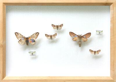 Akihiro Higuchi, 'Collection 1508', 2008