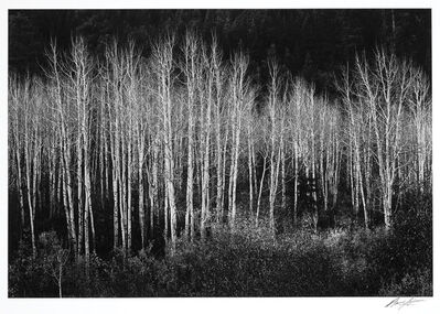 Ansel Adams, 'Aspens, Dawn, Dolores River Canyon, Autumn, Colorado', 1937