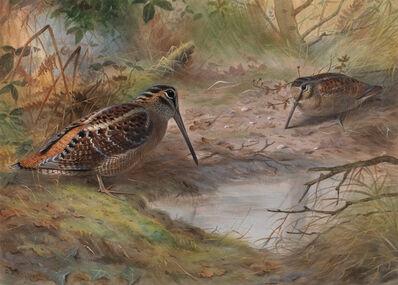 David Kristupas, 'Woodcocks Feeding', Active Contemporary