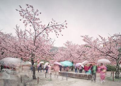 David Burdeny, 'Sakura and Umbrellas, Kyoto, Japan', 2018