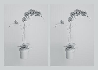 Kerem Ozan Bayraktar, 'Twins', 2019