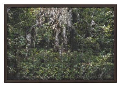 Andreas Greiner, 'Jungle_Memory_0010', 2019
