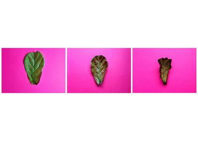 Juliana Curi, 'Pink Intervention #4', 2015