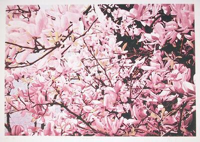 Jon D'Orazio, 'Magnolia II', ca. 1979