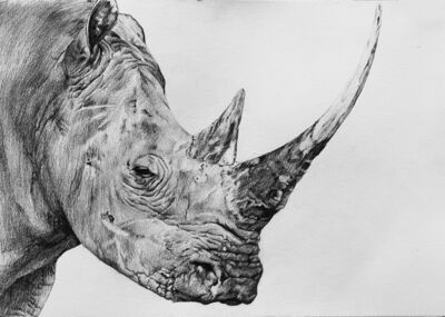 Aythami Armas, 'Rhino'