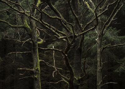 Per Bak Jensen, 'Erindring / Memory', 2018