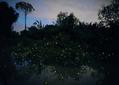 Elijah Gowin, 'Fireflies in Trees, Malaysia. From the series The Last Firefly', 2017