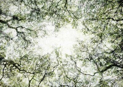 Santeri Tuori, 'Forest 46', 2021
