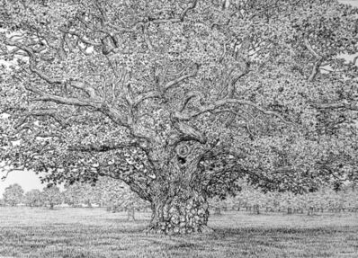 Roy Wright, 'Summer arrives on the Old Oak III', 2021
