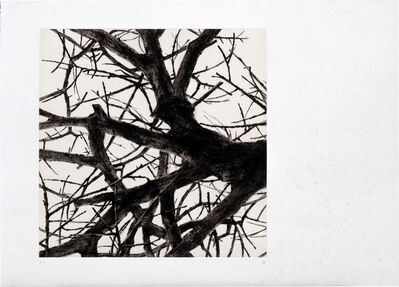Rieko Hidaka, 'From the Space of Trees - a', 2001