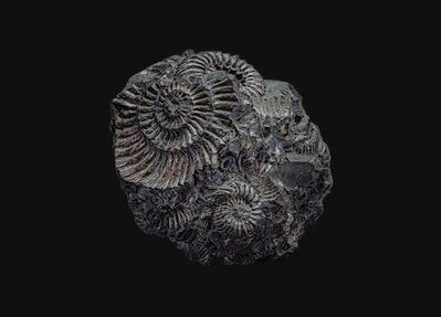 andrey akimov, 'Fossil#2', 2019