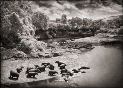 Nick Brandt, 'Hippo on the Mara River, Maasai Mara ', 2002