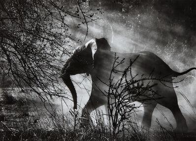Sebastião Salgado, 'Elephant (Against light), Kafue National Park, Zambia', 2010