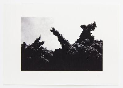 Lilah Fowler, 'flora #1', 2013