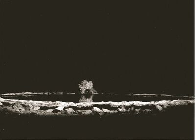 Sebastião Salgado, 'A leopard in the Barab River Valley, Damaraland. Namibia', 2005