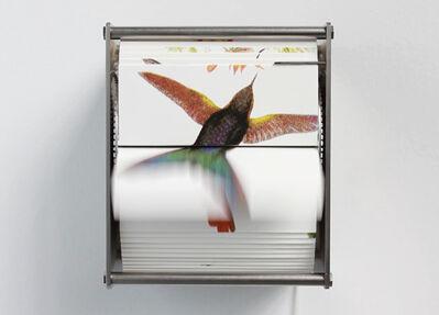 Juan Fontanive, 'Ornithology Ab', 2014