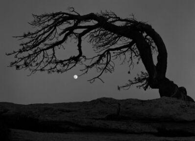 Charles Cramer, 'Moon, Jeffrey Pine, Yosemite Nat'l Park', 2007