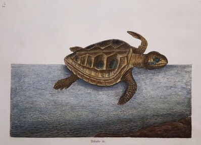 Mark Catesby, 'The Loggerhead Turtle', 1754