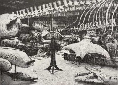Jürg Kreienbühl, 'Galerie de Zoologie, Musée National d'Histoire naturelle de Paris', 1986-1995