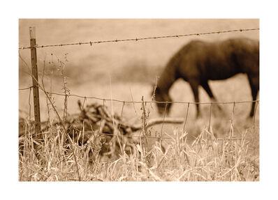 Gary Bernstein, 'Horse in Field', 1967