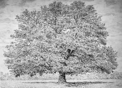 Roy Wright, 'Oak in Mid-Summer', 2011