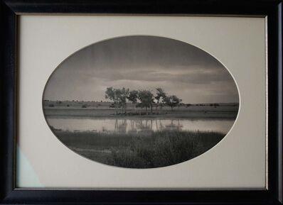 Kate Breakey, 'Trees, Pond, New Mexico'