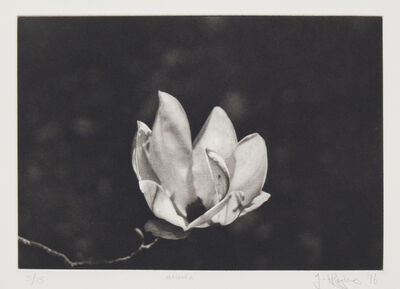 Jonathan K Higgins, 'Magnolia', 1996