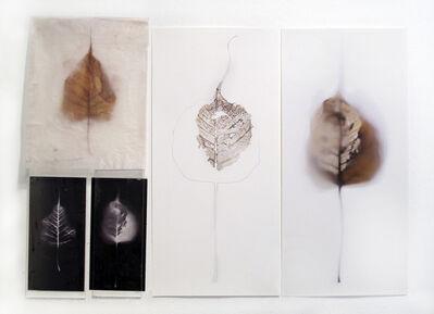 luisa sartori, 'Untitled (group)', 2015