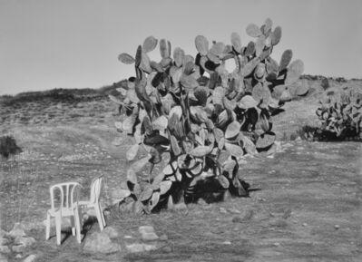 Samah Shihadi, 'Cactus Harvest #3', 2018