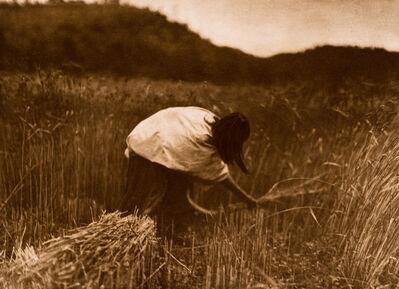 Edward Sheriff Curtis, 'The Apache Reaper', ca. 1906