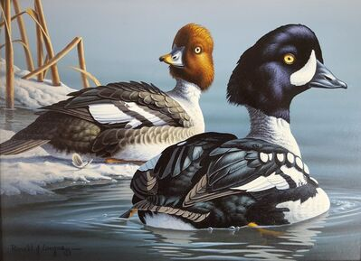 Ron Louque, 'Barrow's Goldeneye', 1989