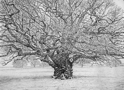 Roy Wright, 'Snow Rests on the Winter Oak', 2021