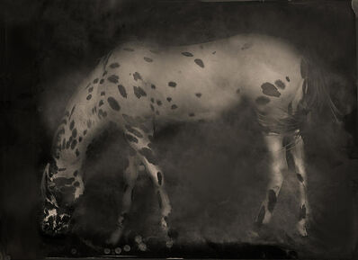 Keith Carter, 'Leopard Appaloosa', 2014