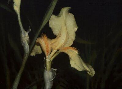 Daniel Sprick, 'Iris ', 2008