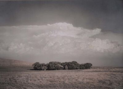 Kate Breakey, 'Copse of Trees near The Coorong, South Australia     '