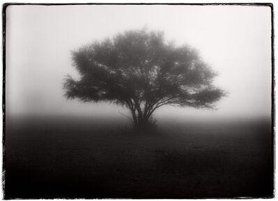 Vladimir Frumin, 'Tree in Fog ', 2016