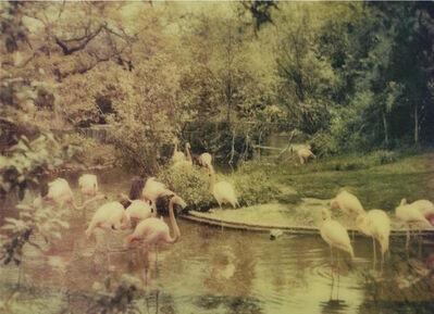 Joshua Jensen-Nagle, 'Flamingos'