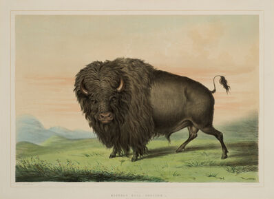 George Catlin, 'Buffalo Bull Grazing ', 1844