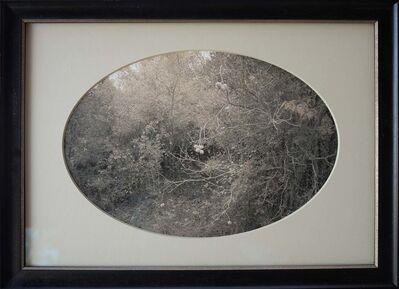 Kate Breakey, 'Buckeye, Plum Creek, Texas    '