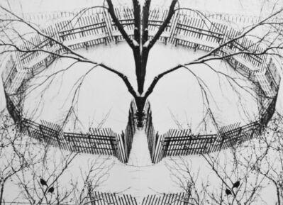 André Kertész, 'A Winter Garden, New York', 1970