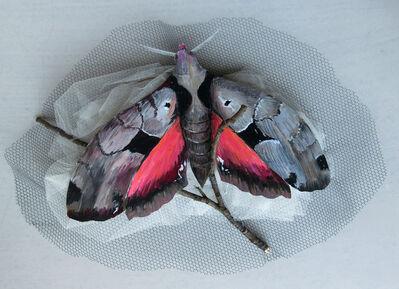 Gillian Bradshaw-Smith, 'Eumorpha Moth', 2018