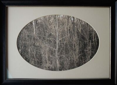 Kate Breakey, 'Pale Sapling, Swamp, Plum Creek, Texas'