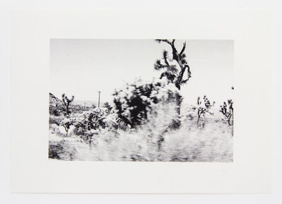 Lilah Fowler, 'flora #2', 2013