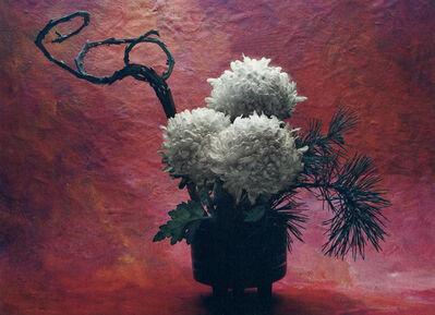 Cy DeCosse, 'Japanese Chrysanthemum'