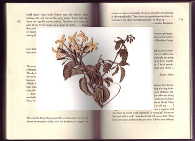 Peter Miller, 'The Flower (that I found pressed in)', 2014