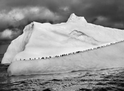 Sebastião Salgado, 'Genesis: Chinstrap Penguins on an Iceberg between Zavodovski and Visokoi Islands, South Sandwich Islands', 2009